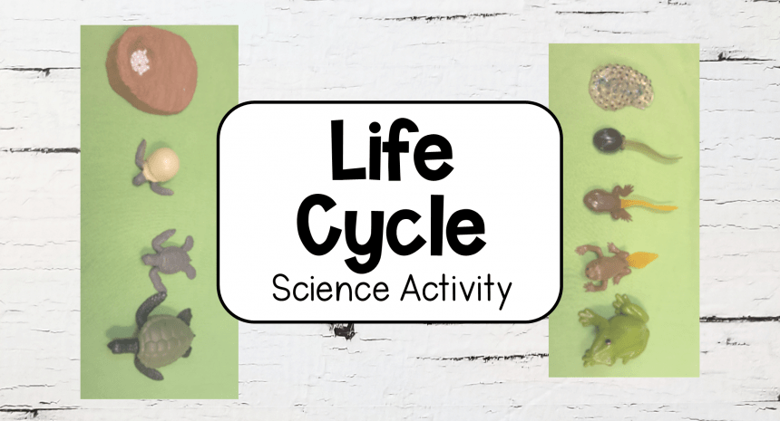 Life Cycle Activity for Kids