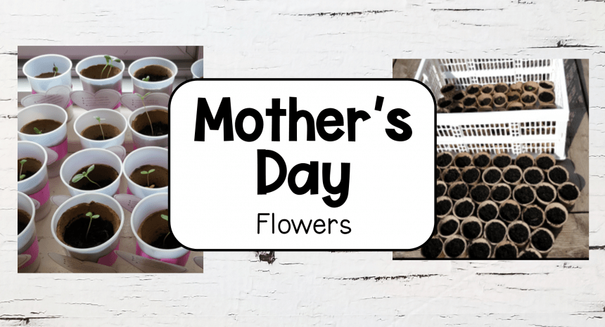 Mothers Day Idea – Child Planted Flowers