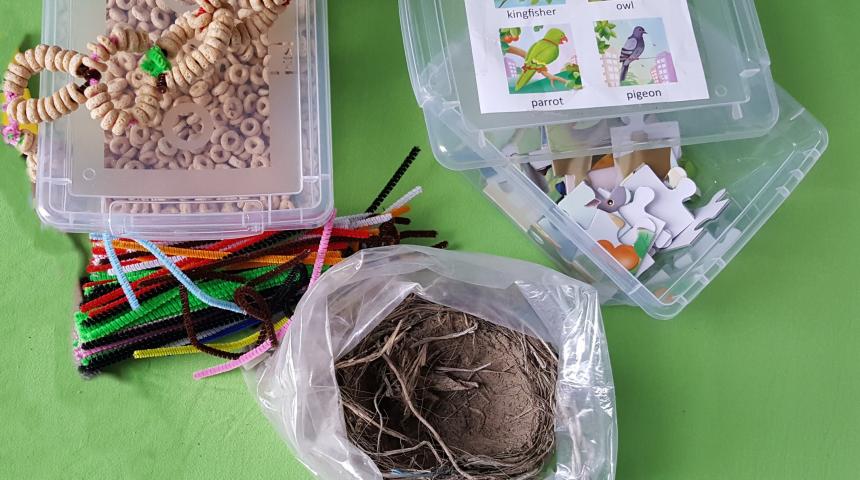 Bird Activities for Kindergarten